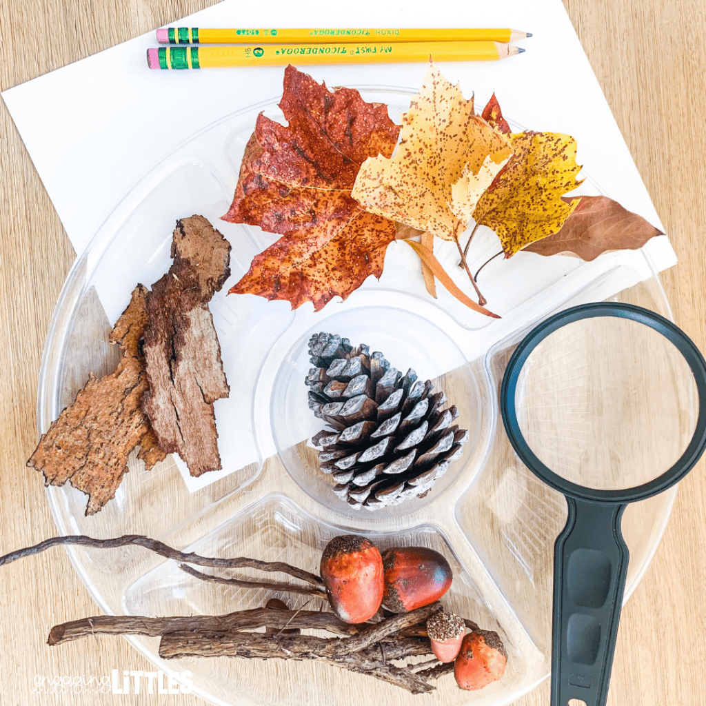 fall science for preschoolers